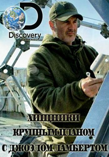 Discovery. Хищники крупным планом с Джоэлом Ламбертом [01-05 выпуски из 05] | HDTVRip | P1