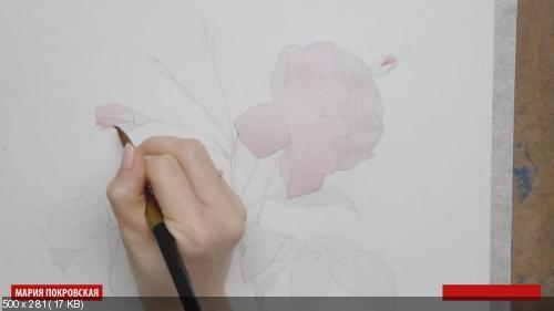 Базовый курс рисования для новичков. Видеокурс [Мария Покровская] (2015) [PCRec]