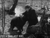 Болотная собака / Der Moorhund (1960)